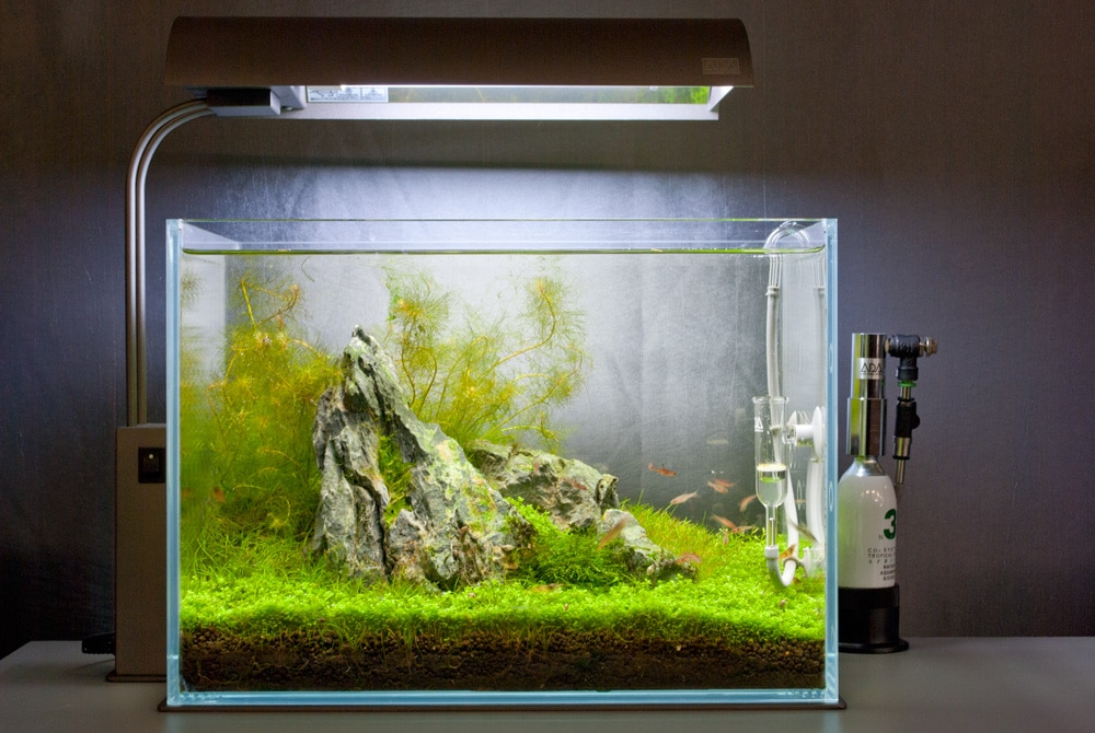 Aquatic Layout Guide Rules Of Composition The Golden Ratio Creating Perspective And Layout Shapes Aquascape Art The Green Machine