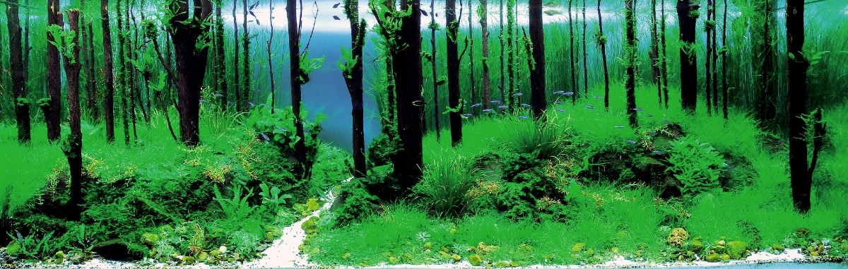 Iaplc 2011 World Ranking 2 Song Of Forest Aquascape Art The Green Machine