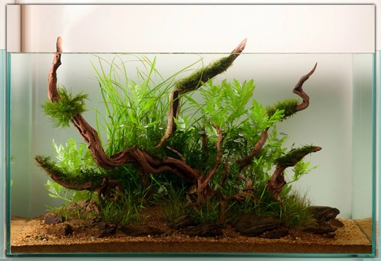 An aquascape created and documented in journal style by Tony Swinney and showcased by The Green Machine - photograph