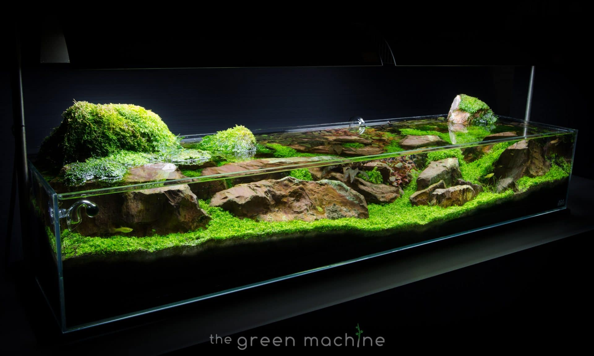 Continuity Aquascape Video Gallery By James Findley Aquascape Art The Green Machine