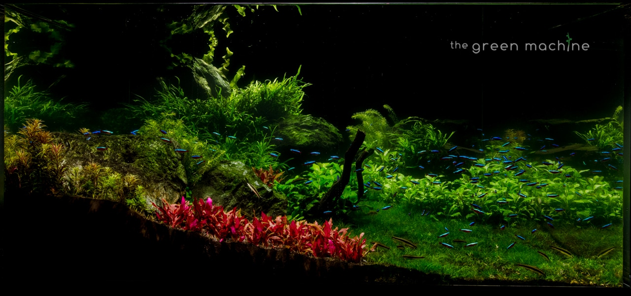 Huge Aquascape Tutorial Step By Step Spontaneity By James Findley For The Green Machine Aquascape Art The Green Machine